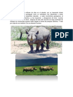 Introduccion Del Rinocer
