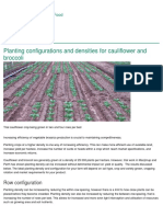 Planting Configurations and Densities for Cauliflower and Broccoli