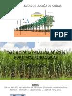 Etapas Fenológicas de La Caña de Azúcar
