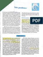 Neuroanatomia de Bustamante