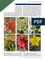 Flora Ornamental de Murcia. Familia Sterculiaceae