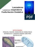 Lanzaderas Cadena y Fosforilacic3b3n