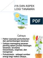 """Teori Ekologi terestrial """"Cahaya Dan Aspek Fisiologi Tanaman"""" by Bu Fahma Wijayanti"""