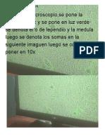 Jose carlo.doc