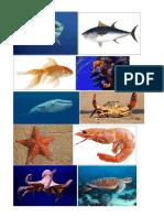 animales-marinos.docx
