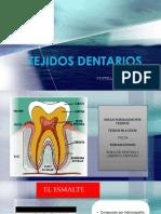 14 Tejidos Dentarios Grupo10 (Yovera, Vilela)