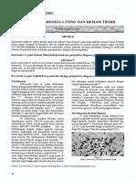 bakteri salmonella typhi dan demam tifodi.pdf