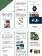 TRIPTICO Plantas