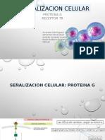 Proteina g