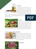 Usos y Utilidad de Las Plantas