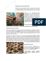 Reproducción de Las Plantas y Ciclo de vida de las Plantas