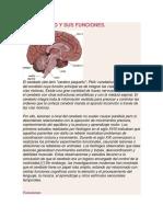 El Cerebelo y Sus Funciones
