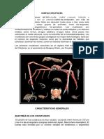 Subfilo Crustacea Parte Fabi