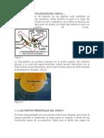 Formación y Fertilización Del Huevo