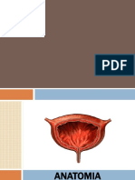 Anatomia de Vejiga