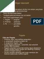 "Teori Fisiologi Mikroba ""Organ Lokomotif"" by Bu Nani Radiastuti M.Si"