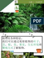 第四课     植物(1)