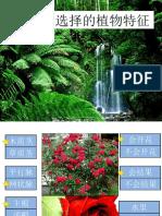 第四课     植物(9)