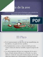 Clase 04-Fisiologia de Un Ave