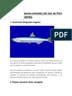 10 de Las Especies Animales Del Mar de Perú Mas Sorprendentes