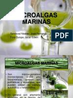 Microalgas Marinas