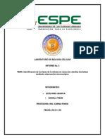 informe 6 - copia.docx