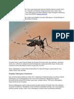 Chikungunya Adalah Penyakit Virus Yang Menyerang Manusia Melalui Gigitan Nyamuk