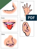 5 sentidos con nombre.docx