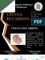 CELULA-EUCARIOTA