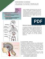 Sistema Endocrino y Las Hormonas