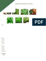 Variedad de Plantas de La Costa