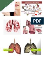 Imagenes Pulmones y Fumar