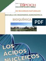 Bioquimica ACIDOS NUCLEICOS