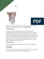 Músculo esplenio y espinoso.docx