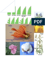 Catalogo de Plantas de Curahuasi