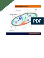 Anatomía de Paramecium