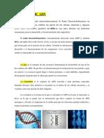 ADN Y FUNCIONES.docx