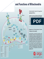 Structure-and-Functions-of-Mitochondria-Poster.pdf