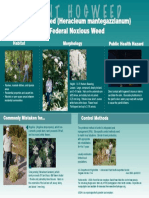 Hogweed Infographic