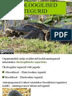okotegurid-100218115441-phpapp01