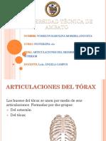 (Anatomía) Articulaciones Del Esternon