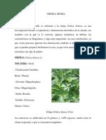 Urtica Dioica