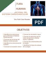 18a Sesión Practica 8 Estructura y Función Humana Sistema Cardiovascular 1a parte