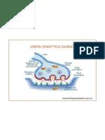 Sinapsis Química e Impulso Nervioso
