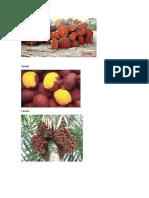 Plantas Ucayali