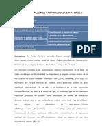 La regeneración de las marismas de Rio Arillo.docx