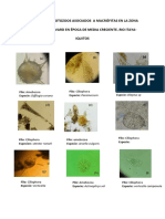 catalago de protozoos.pdf