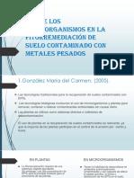 ROL de Los Microorganismos en La Fitorremediación de.pptx-SUELOS