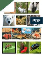 Animales Acuaticos Granja Salvajes Insectos