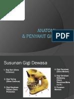 Anatomi Dan Penyakit Gigi